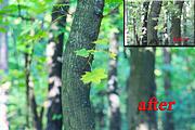 I will make color correction of photos 6 - kwork.com