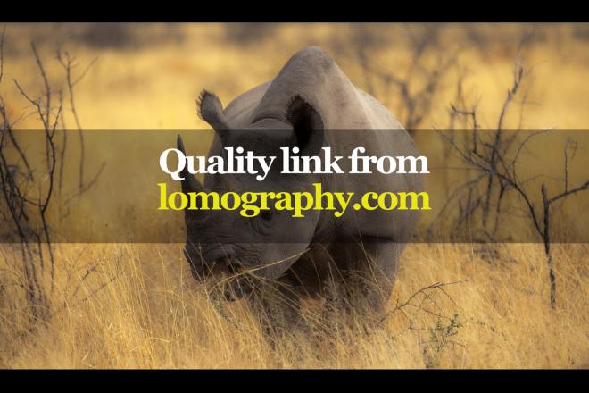 Quality link from lomography.com 1 - kwork.com